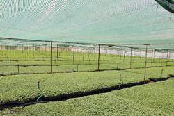 نیمی از تولیدات کشاورزی یزد کم آبخواه هستند