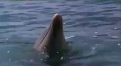 دلفین مهربان