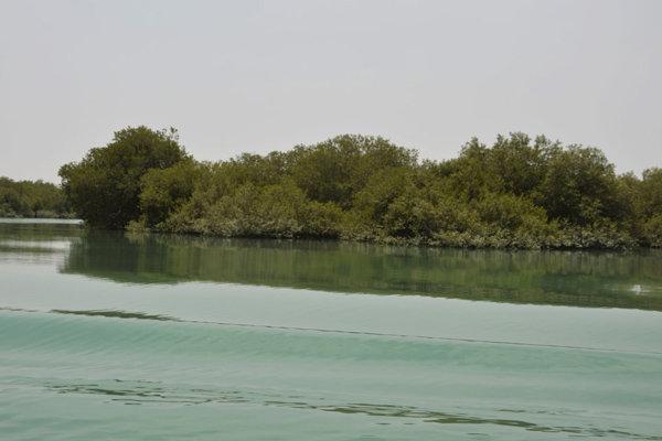 رازهای جنگل شگفتانگیز ایران/ خرچنگها اینجا گیتار مینوازند!