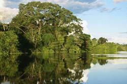 اتمام گلدهی جنگلهای حرا در هرمزگان