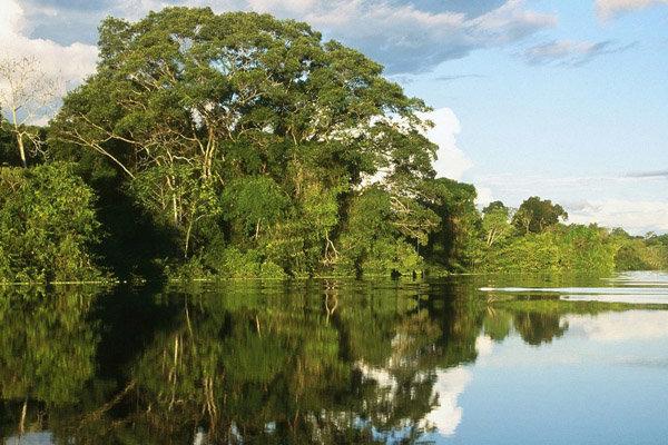 کاشت ۴۵ هکتار درختهای مانگرو در استان هرمزگان آغاز شد