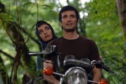فیلم «دلتنگیهای عاشقانه» رونمایی میشود