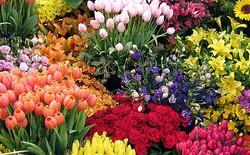 Foreign officials to attend Mahallat Flora Fair
