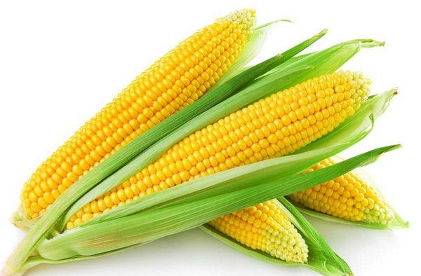 ذرت کشاورزی