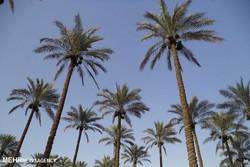 کشاورزان تنگستانی چشمانتظار ساخت سد/ آب باغات و اراضی تامین شود
