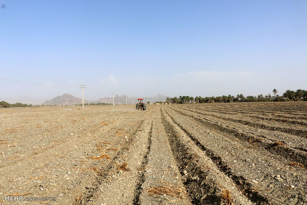 ۸۰  هکتار از اراضی کشاورزی شادگان تسطیح شد