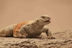 """""""الغلاف البيئي للجميع"""" عمل دقيق يرصد حياة الزواحف الايرانية"""