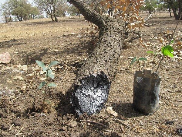 کاشت ۵۰۰ گلدان بذر گونه های بومی در طبیعت کهگیلویه و بویراحمد