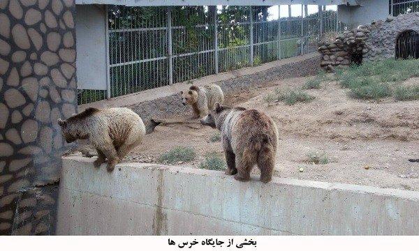 باغ وحش ارم