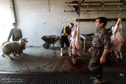 بازار فروش و ذبح دام در عید قربان