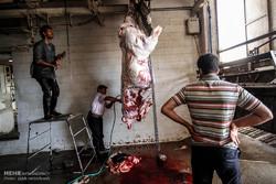 کشتار غیرمجاز دام در اردبیل به دلیل تقاضای بازار تداوم دارد
