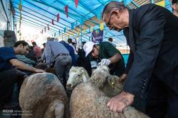 ۳۶ اکیپ دامپزشکی ذبح دام را در روز عید قربان کنترل میکنند