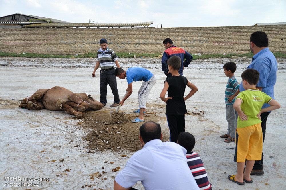 عید سعید قربان در آق قلا