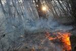 مهار آتش سوزی جنگلهای حاشیه رود ارس/دود پارس آباد را پوشانده است