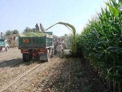 احتمال سرمازدگی محصولات کشاورزی در چهارمحال و بختیاری وجود دارد