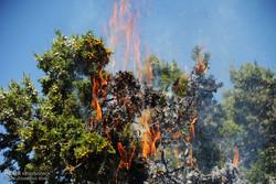 ۱۰۰ هکتار از اراضی مرتعی پارک ملی گلستان در آتش سوخت