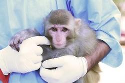 باحث ايراني: وليد القردين الفضائيين في صحة جيدة