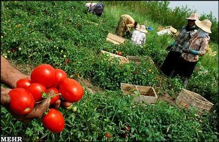 ۸۱ کشاورز نمونه ملی معرفی میشوند
