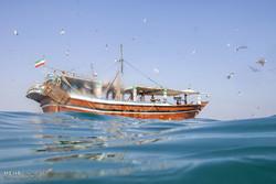 صید میگو در جزیره قشم