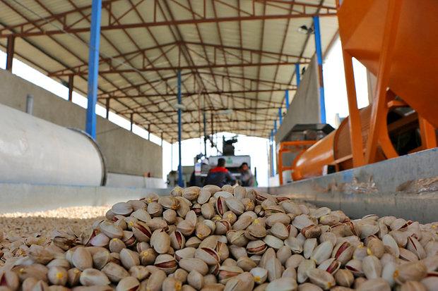 ۳۰ درصد صادرات پسته کشور از رفسنجان است