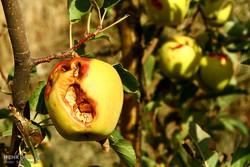 امید کشاورزان و دامداران قم به پرداخت ۱۶۰ میلیارد تومان خسارت