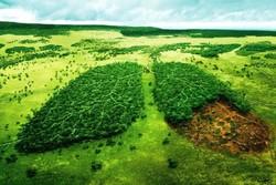 فضای سبز
