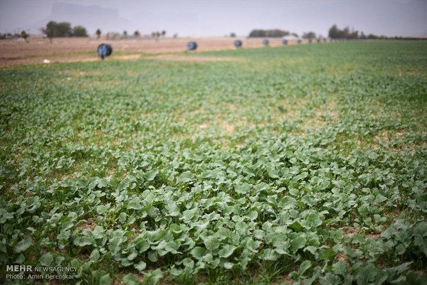 سفر وزیر جهاد کشاورزی به شیراز
