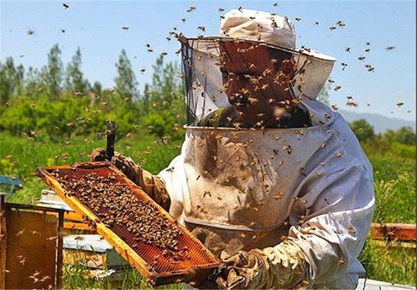 تولید شش هزار تن عسل سبلان/اردبیل رتبه اول استان شد