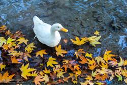 Autumn in Bojnourd
