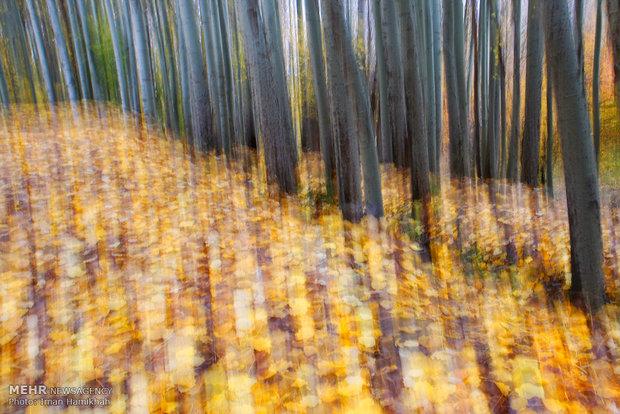 Hemedan eyaletinin sonbaharından eşsiz kareler