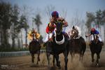 هفته بیست و پنجم کورس اسبدوانی پاییزه گنبد برگزار شد