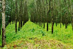 جنگل کاری