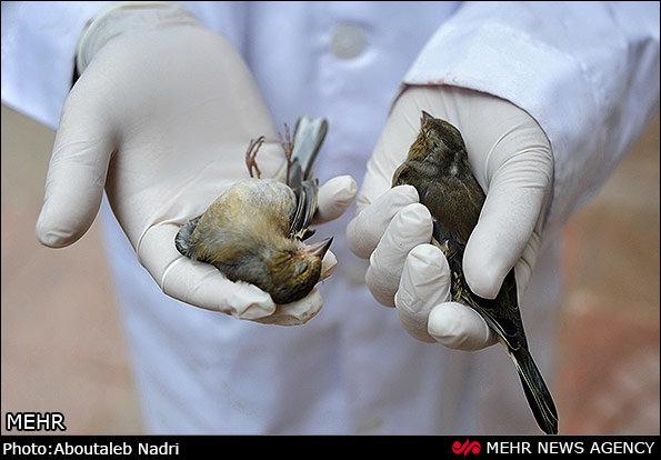 چراغسبز محیطزیست به شکارچیان/ خواب حیاتوحش گلستان آشفته شد