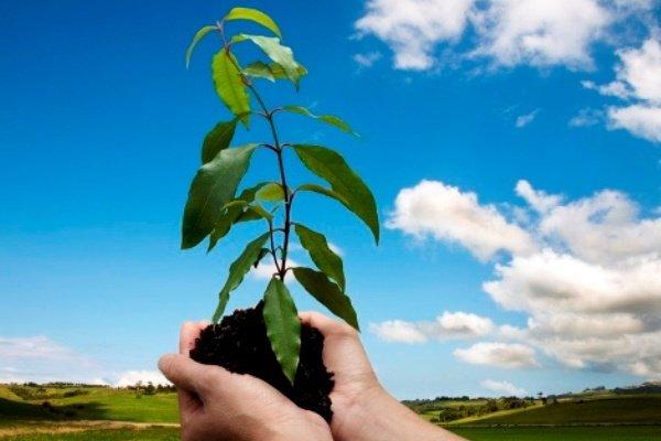 کراپشده - درختکاری