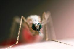 ۹۰ درصد موارد ابتلا به مالاریا در جنوب صحرای آفریقا اتفاق می افتد