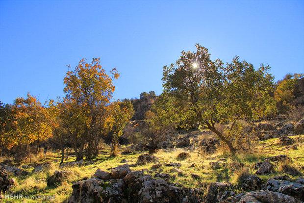 طبیعت پائیزی در رومشگان
