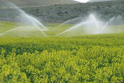 اجرای سیستم آبیاری نوین در ششهزار هکتار از اراضی کشاورزی دشتی