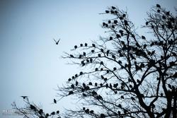 وجود ۳۰ تالاب در آذربایجان غربی/ میزبانی از ۱۲۰ هزار قطعه پرنده