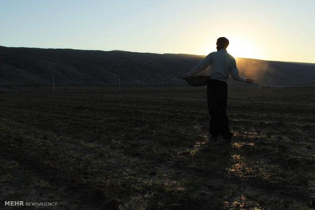 محصولات پاییزه در سراشیبی تولید/ آژیر قرمز در مهد کشاورزی