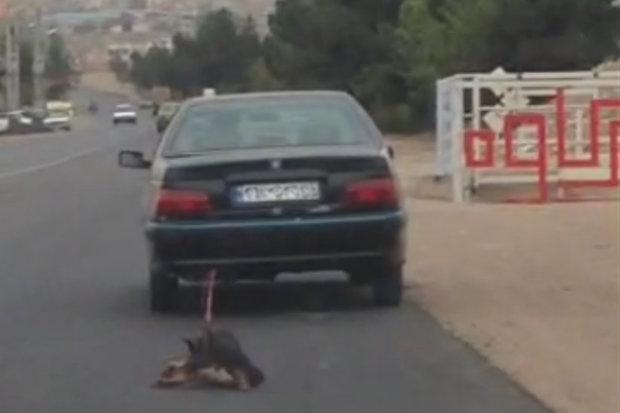 تکرار حیوانآزاری این بار در تهران/ نقش حیوانآزاری در افزایش بزه