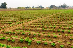 ۶ ساعت قطع برق اجباری چاههای آب کشاورزان شوش را آزار می دهد