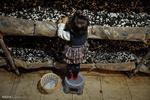 چگونه با پرورش قارچ پولدار شویم؟