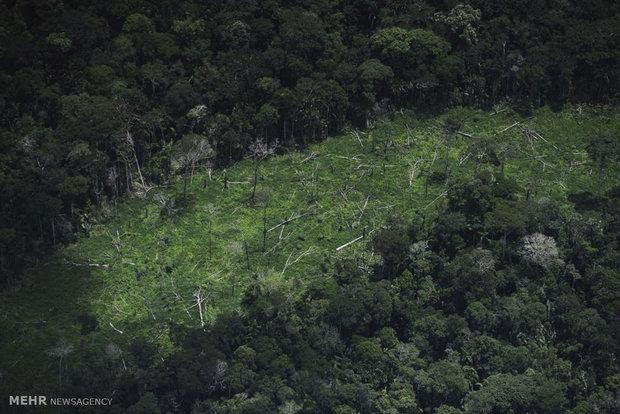 تشریح برنامههای دولت در هفته منابع طبیعی