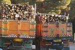 ۱۲۰ تن چوب و ۱۵ تن ذغال قاچاق در استان اصفهان کشف و توقیف شد