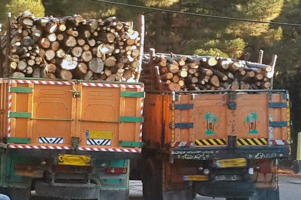 قاچاقچی درختان جنگلی بلوط شهرستان رستم دستگیر شد