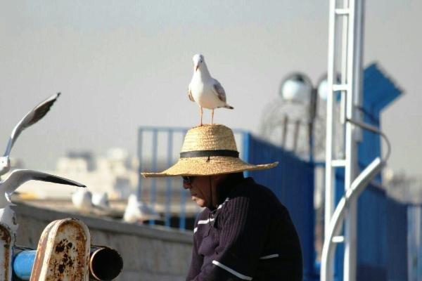 ماجرای مردی که مرغان دریایی دوستش دارند