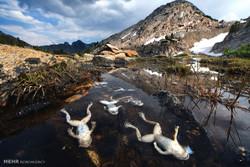 اثرات تغییرات آب و هوایی