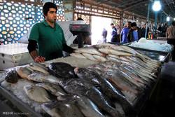واسطه ها و دلالان از بازار ماهی فروشان باید حذف شوند