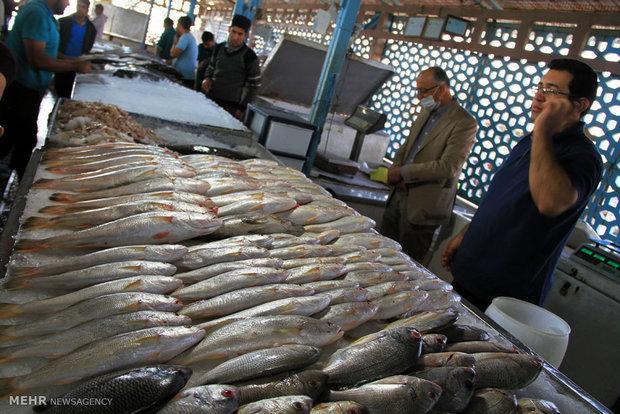 عرضه مستقیم ماهی در بندرعباس آغاز می شود