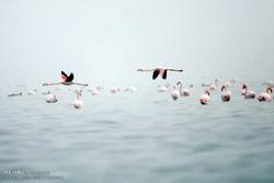 Migratory birds arrive in Iran